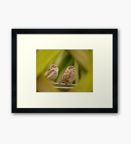 That's A Very Strange Eye Looking At Us.. - Sparrow Fledglings - NZ Framed Print