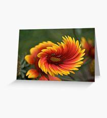 Freedom Flower Greeting Card
