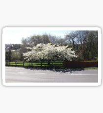 White Cherry Blossom Sticker