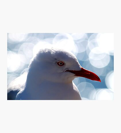 Portrait Of A Red-billed Gull Photographic Print