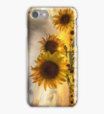 Sunflower Sunburst Sunset iPhone Case/Skin