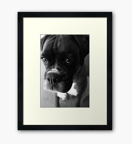 Kannst du nicht sagen ... Es war nicht ich ... - Boxer Dogs Series Gerahmter Kunstdruck