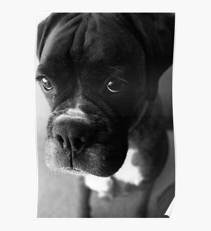 Kannst du nicht sagen ... Es war nicht ich ... - Boxer Dogs Series Poster
