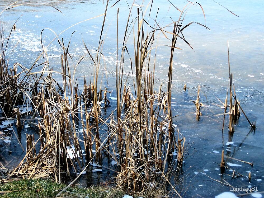 Frozen Cattails by Lyndsay81