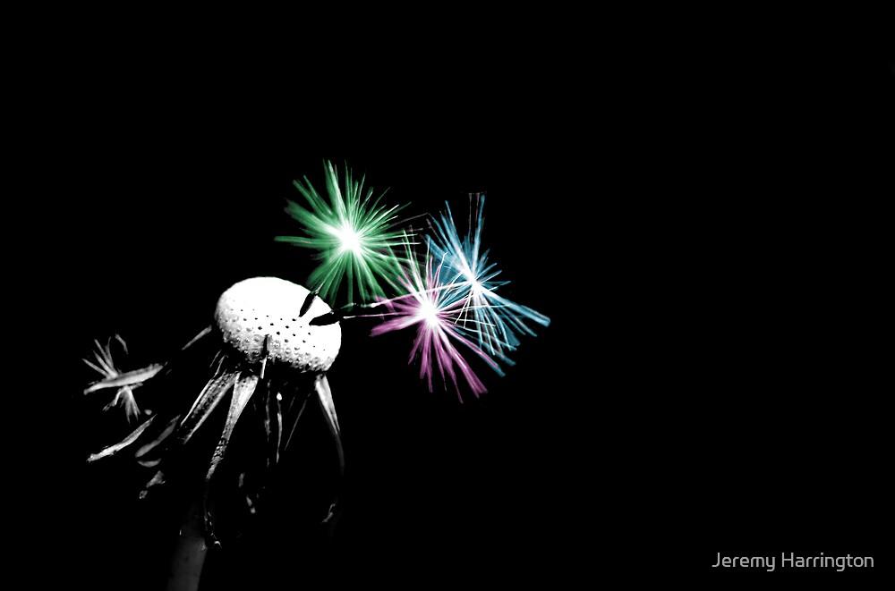 Floral Fireworks by Jeremy Harrington