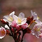 Blossoms Bouquet by Debbie Oppermann