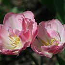 Tulip Twins by Monnie Ryan