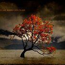 Lone Tree Of Lake Wanaka, New Zealand by Alex Preiss