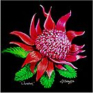 Waratah  by Linda Callaghan