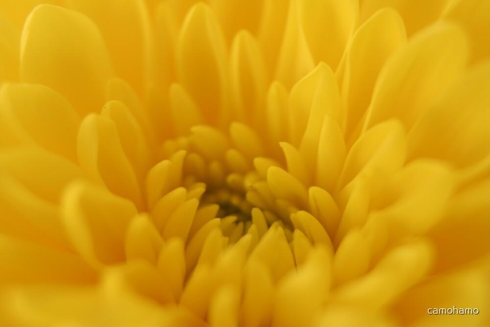 Petals by camohamo