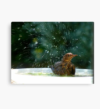 I Like To Stay In Tip-Top Condition - Blackbird Bathing - NZ Canvas Print