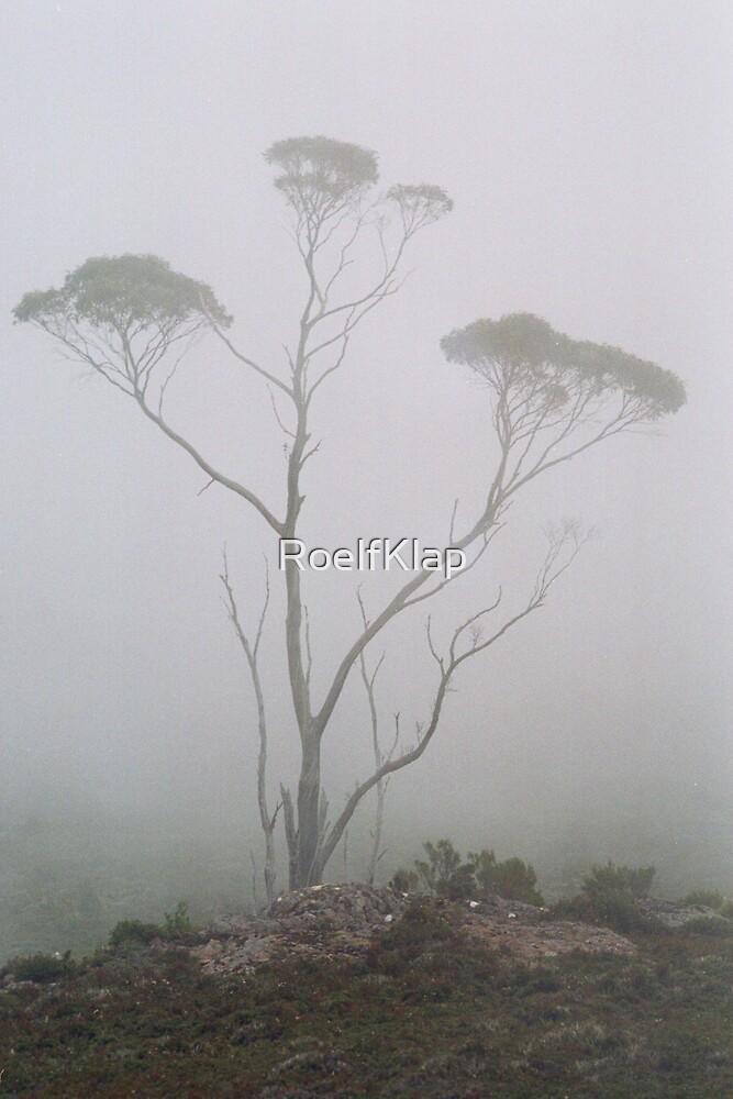 Tree in mist by RoelfKlap