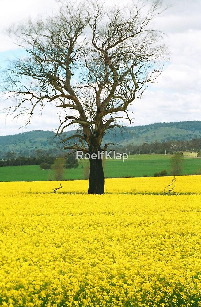 Tree in Canola field by RoelfKlap
