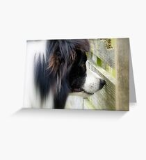 I Keep A Close Watch On These Sheep Of Mine... Border Collie - NZ Greeting Card