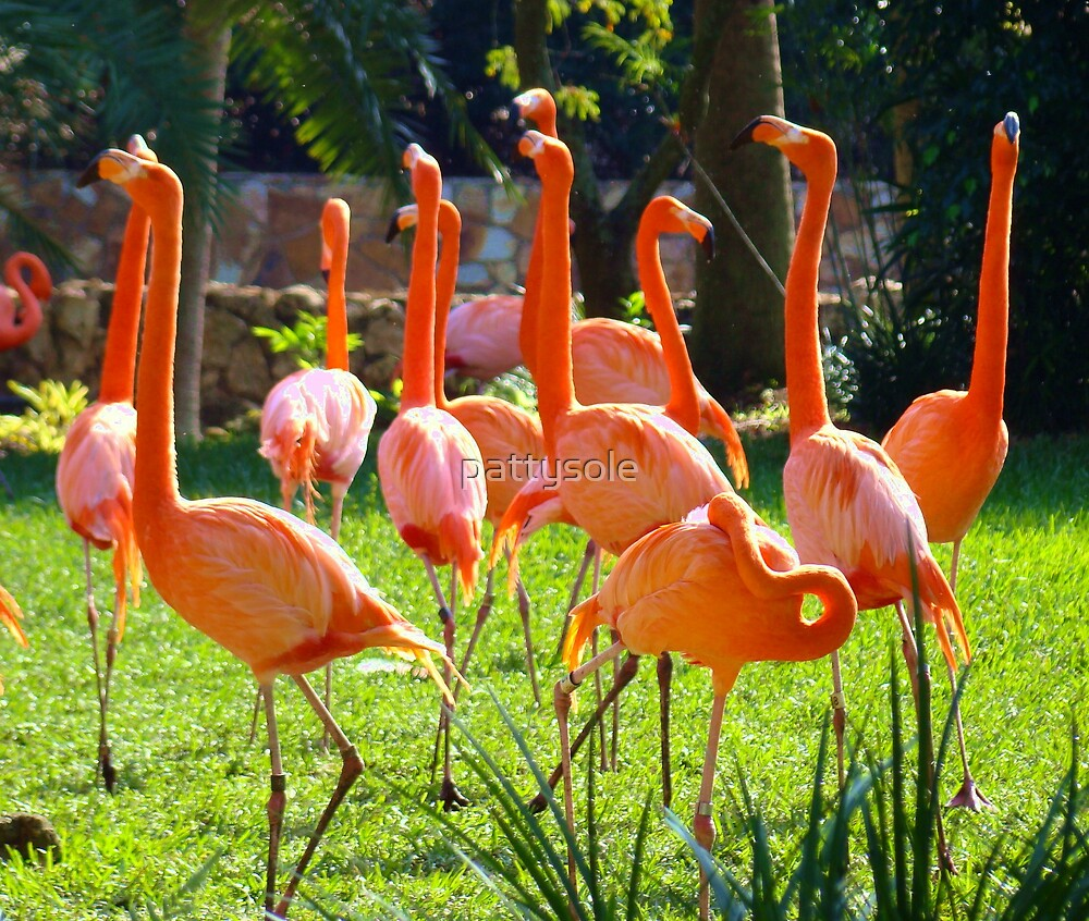 Flamingo's by pattysole
