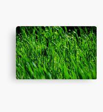 High Grass Canvas Print