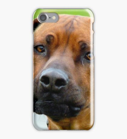 Aww.. You've Got Chooks Running Round Your Yard - Rhodesian Ridgeback - NZ iPhone Case/Skin