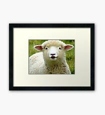 Oooh! La La... - Baby Lamb - Sheep - NZ Framed Print