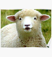 Oooh! La La... - Baby Lamb - Sheep - NZ Poster