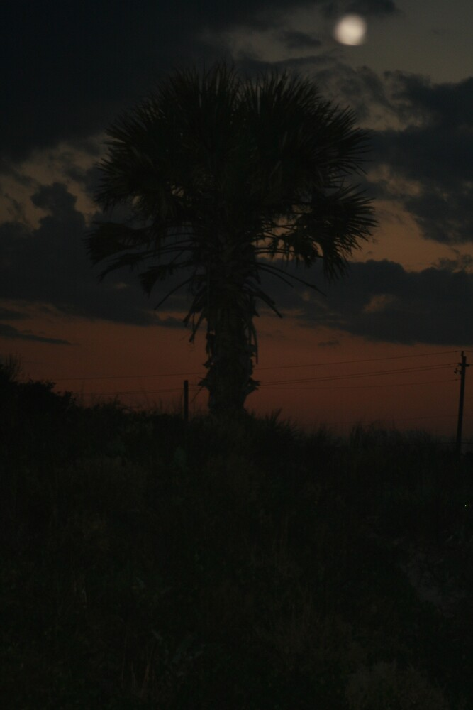 midnight palmtree by bgsq2