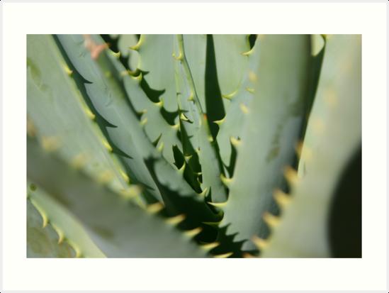 Aloe by BekB