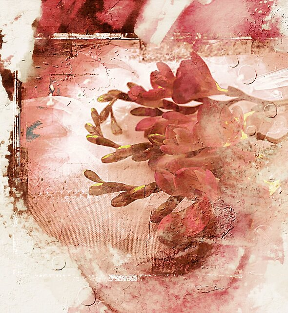 Deep Rose Freesia by Sandra Sigfusson