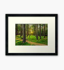 Sunset Park Framed Print