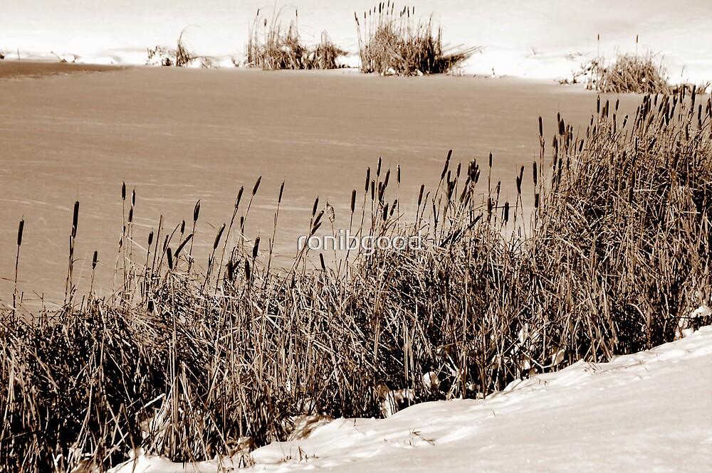 Sepia Frozen Lake by ronibgood