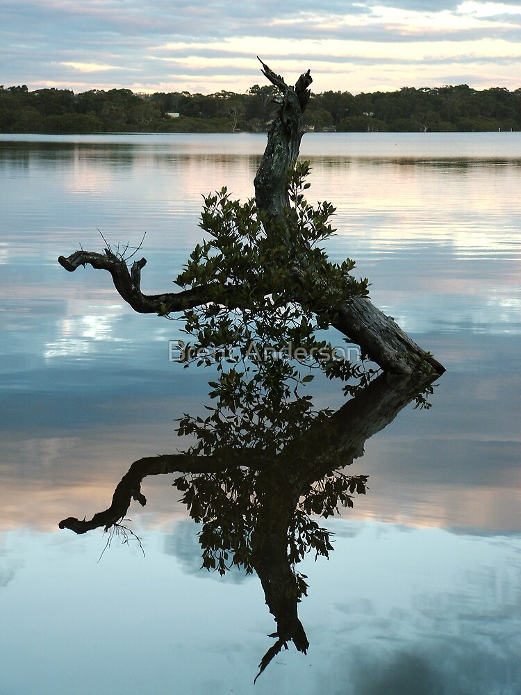 Mangrove Tree Reflection by Brent Anderson