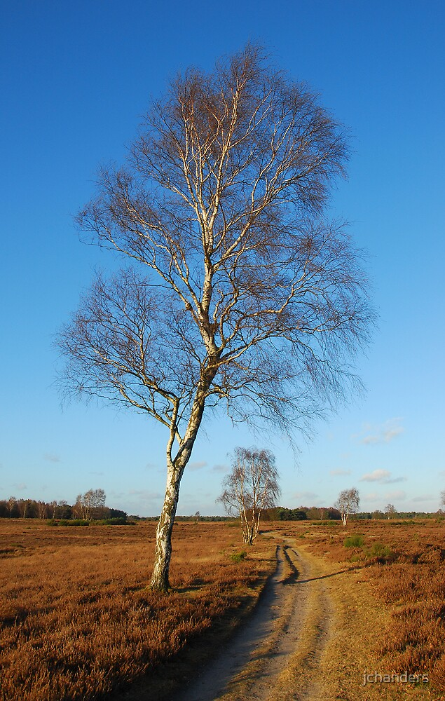 Walking on the December heath by jchanders