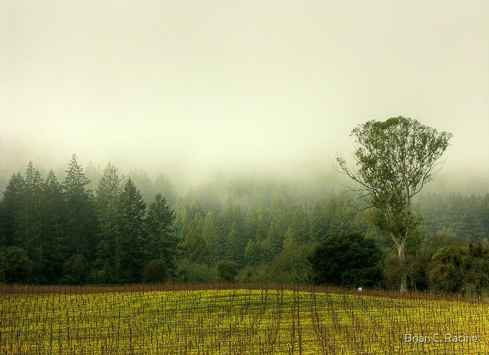 Redwoods vs. The Eucalyptus by Brian C. Racine