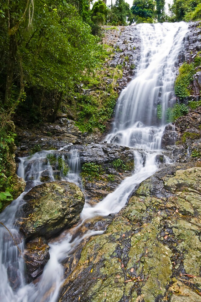 Tristania Falls, Dorrigo, NSW, Australia by Sam Allen