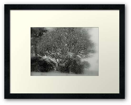 TREE OF SNOW by kevsphotos2008
