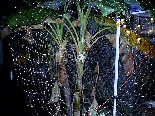 Spider Web by creativebabs