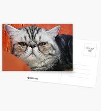 Persian Exotic Postcards