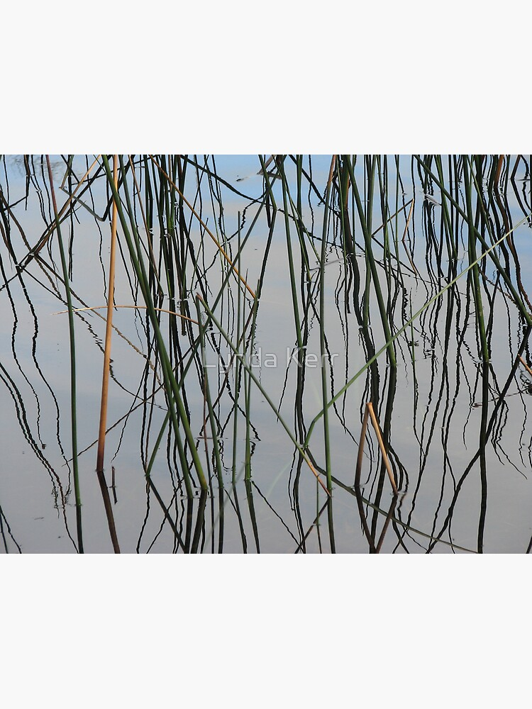 Wobbly Reeds by 4sure