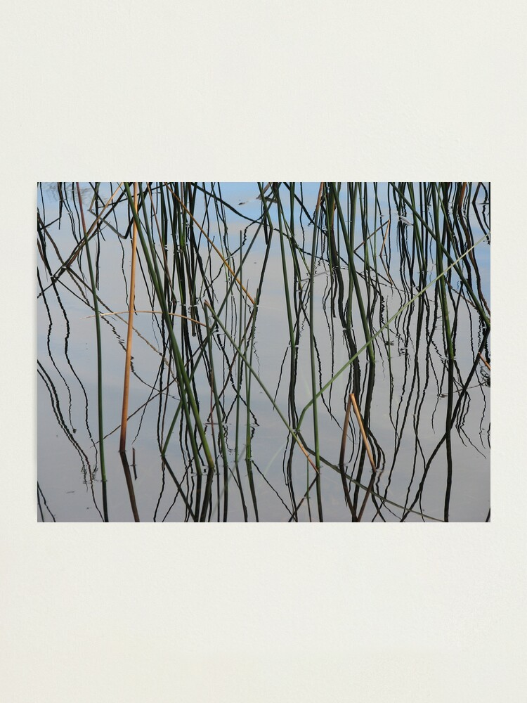 Alternate view of Wobbly Reeds Photographic Print