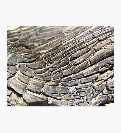 Timber Texture Photographic Print