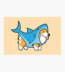 Corgi In a Shark Suit Photographic Print