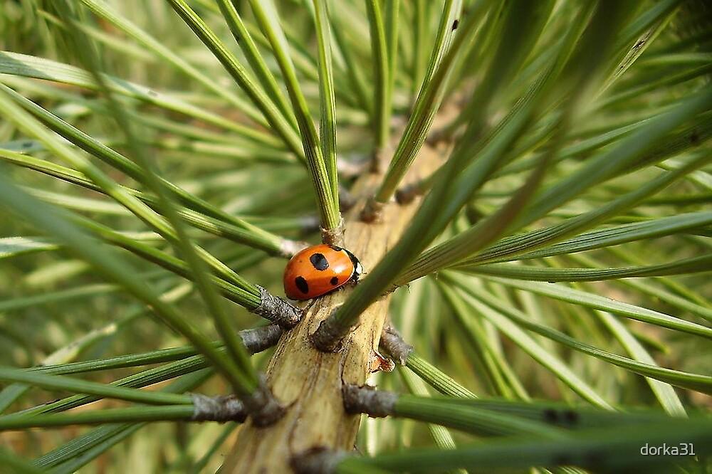 ladybug on pine tree by dorka31