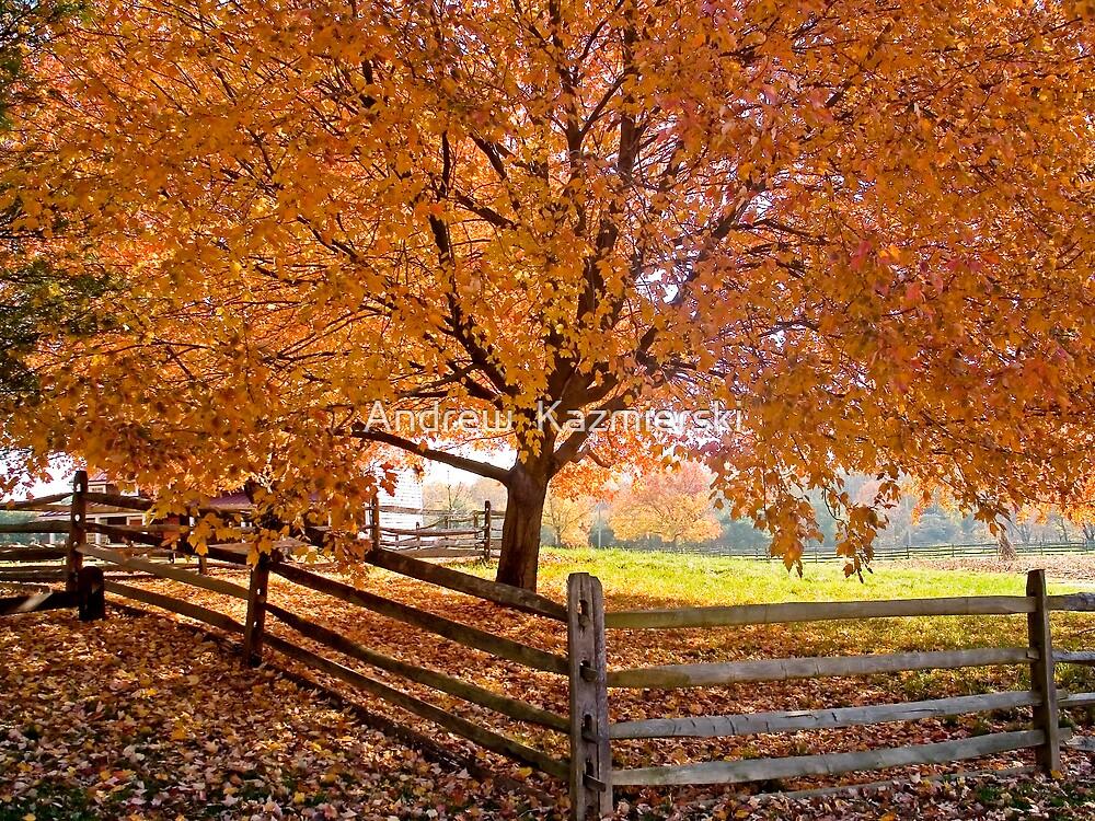 Autumn Shade by andykazie