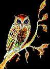Moonlight Owl by Linda Callaghan