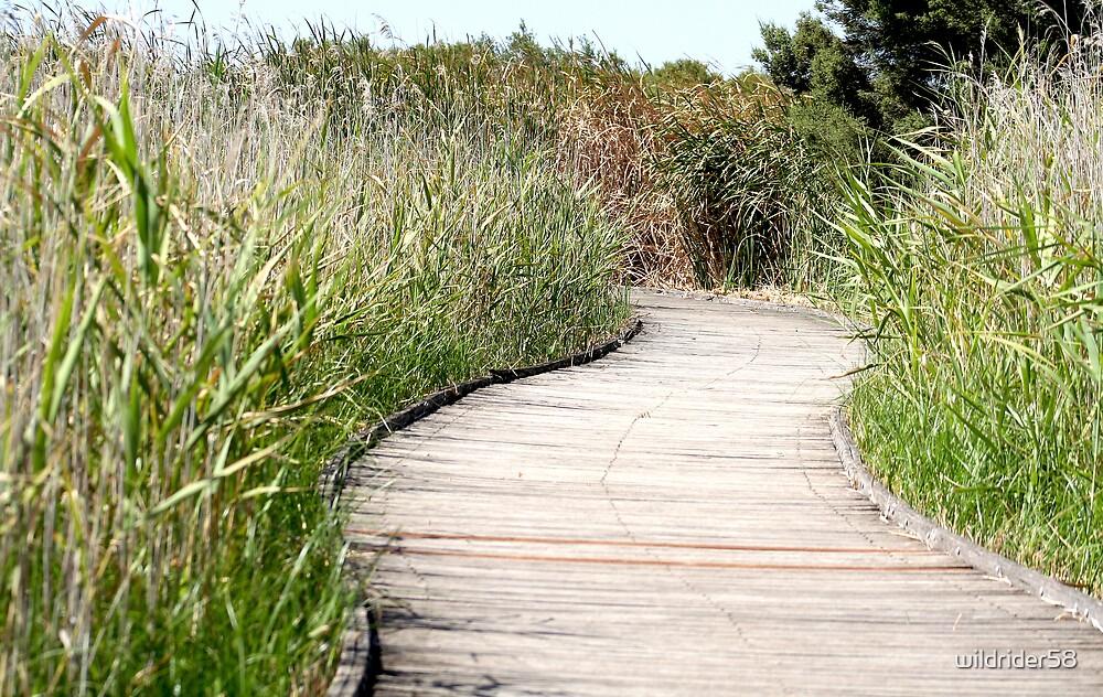 Wetlands Path. by wildrider58