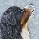 Blissful Blue - Bernese Mountain Dog Catching Snowflakes by bydonna