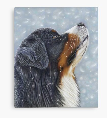 Blissful Blue - Bernese Mountain Dog Catching Snowflakes Canvas Print