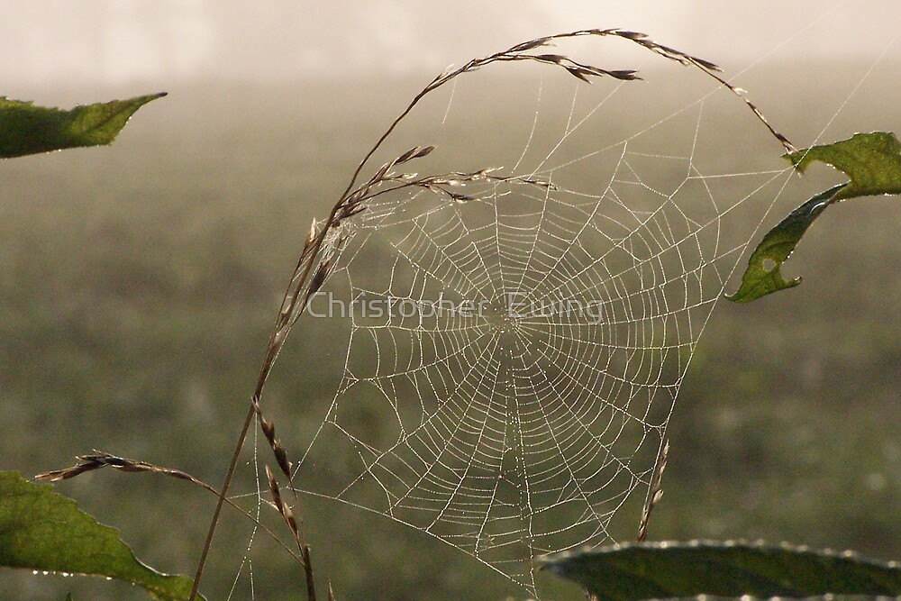 nature's dreamcatcher by Christopher  Ewing