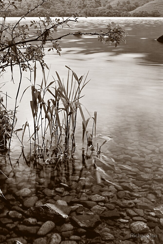 Ullswater Reeds in mono by Richard Ion