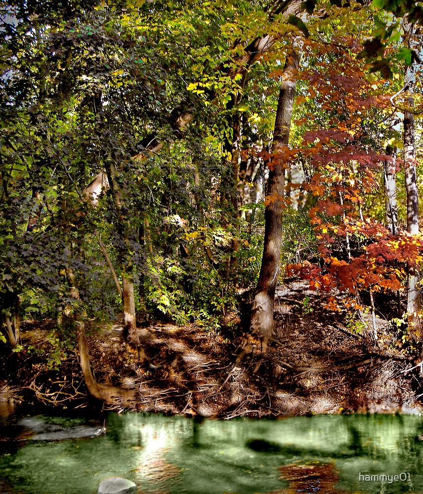 Autumn Colors by hammye01