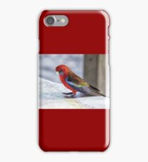 Crimson Rosella, NSW Australia iPhone Case/Skin