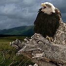 Bald Eagle by EdgeOfReality